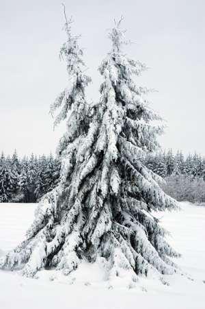 majest�tische Wintereindr�cke